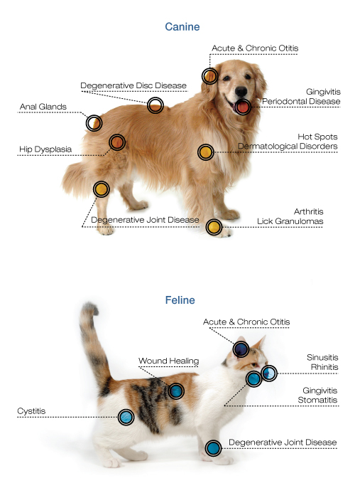 Cornerstone Animal Clinic - laser therapy for dogs & cats - Dallas TX